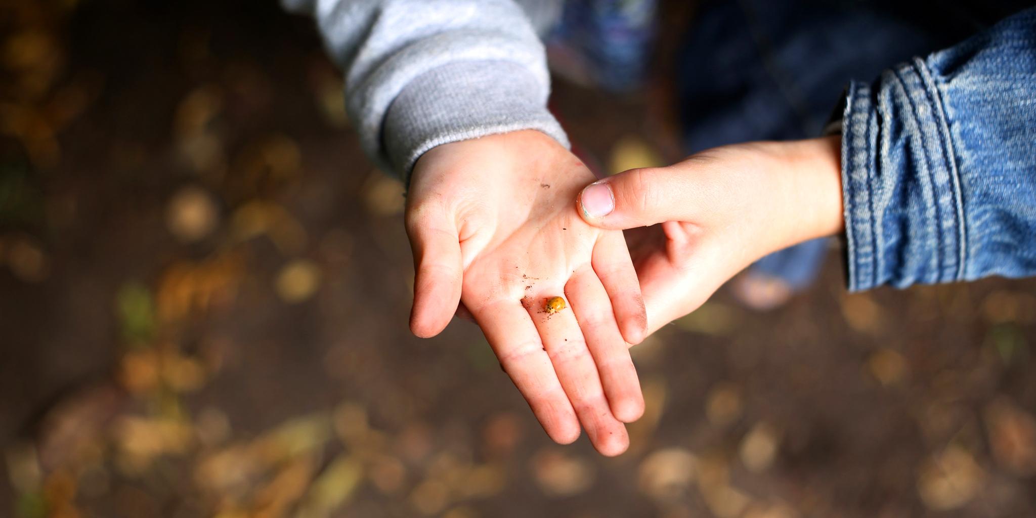 Kinderhand zeigt Marienkäfer