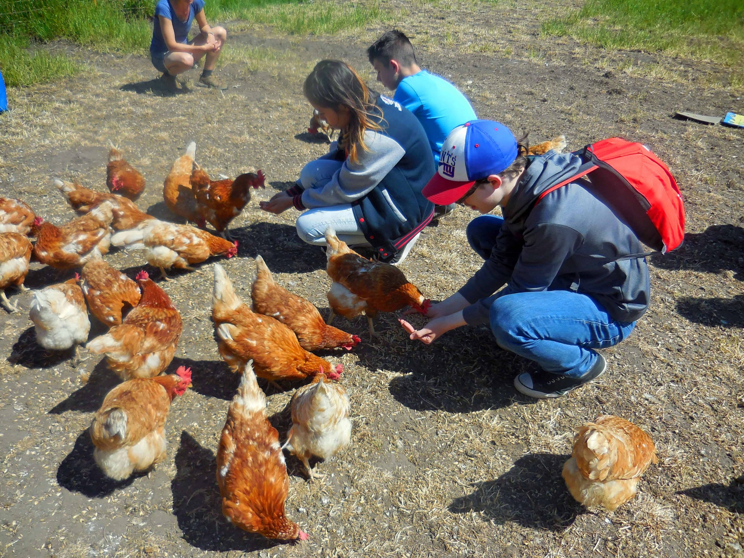 Kinder füttern Hühner